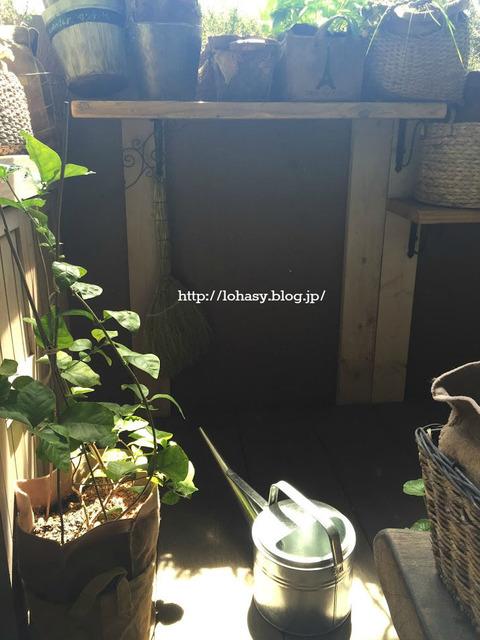 【ベランダガーデン楽して続ける5つのコツ☆】水やりの手間を減らす秘策、コスパ抜群&ナチュラルな害虫予防策、何度も使えて燃えるゴミに出せる土 etc.