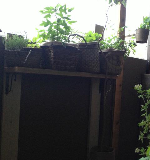 【ベランダのコンクリ壁に棚板を取り付け☆】一番日当たりの良い高さに、鉢を並べています!部屋からの眺めもグー♪