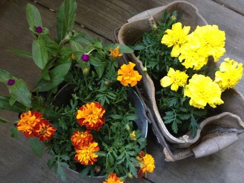 """【本】キッチンガーデン熱 """"キッチンガーデンにはキッチンガーデンにふさわしい花がある。キッチンガーデンにふさわしい花色はクリーム色、黄色、オレンジ色、マゼンタ。"""""""