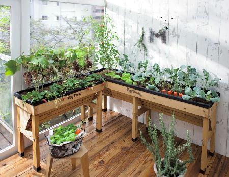 """【英国製の菜園用プランター""""VegTrug""""】高さ80cmだから、ベランダの日当たりで育てられる! これさえあれば、日当たり確保のための鉢台は不要ですね~"""