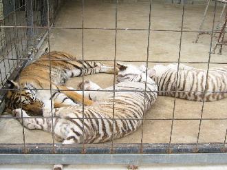 090524しろとり動物園ママとパパ