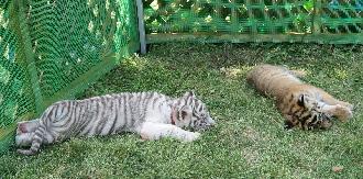 090524しろとり動物園お昼寝