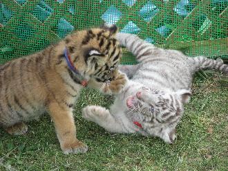 090524しろとり動物園喧嘩