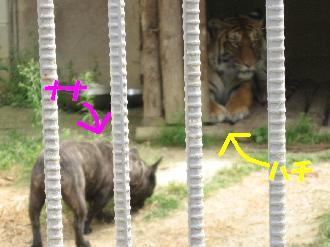 090524しろとり動物園ナナとハチ