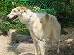 090524しろとり動物園アフガン