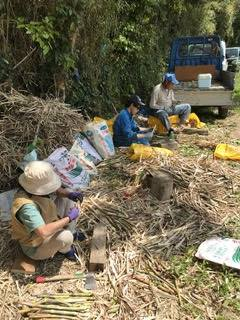 山田正彦-20-種子法問題あり-サトウキビの増殖作業-2.20