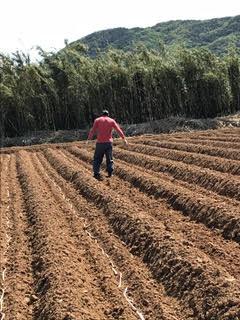 山田正彦-20-種子法問題あり-サトウキビの自家増殖作業-2.20