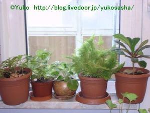 shokubutsu
