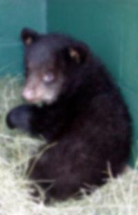 Bear-01 コピー