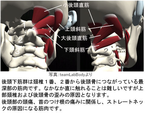 上部頚椎と後頭下筋群の関係