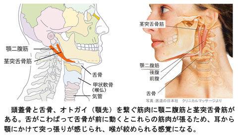 顎二腹筋と茎突舌骨筋と舌骨