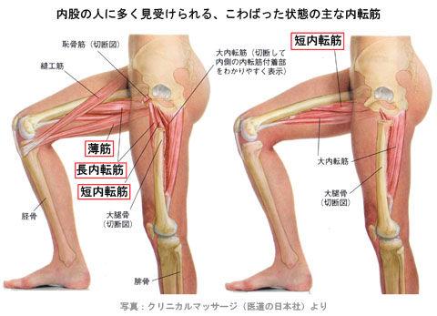 内股の筋肉02