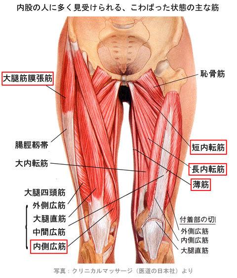 内股の筋肉01
