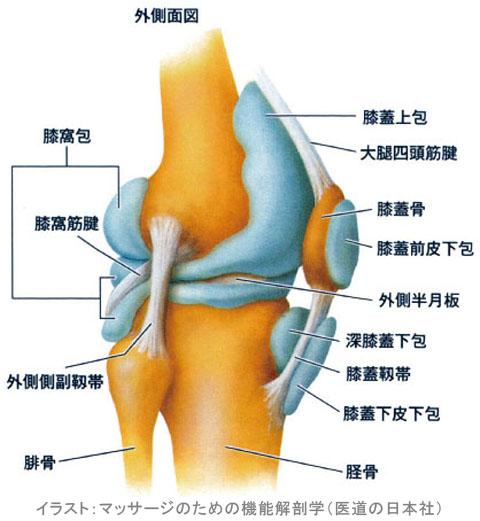 膝の関節包