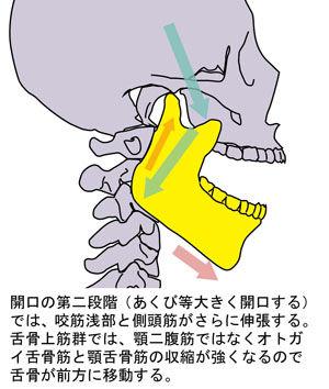 顎関節の動き03
