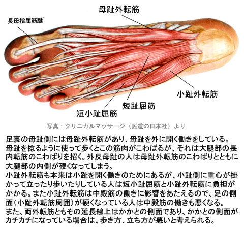 母趾外転筋と小趾外転筋の変調