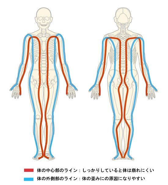 体の中心部と外側部のライン