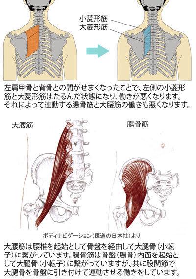 菱形筋と腸腰筋