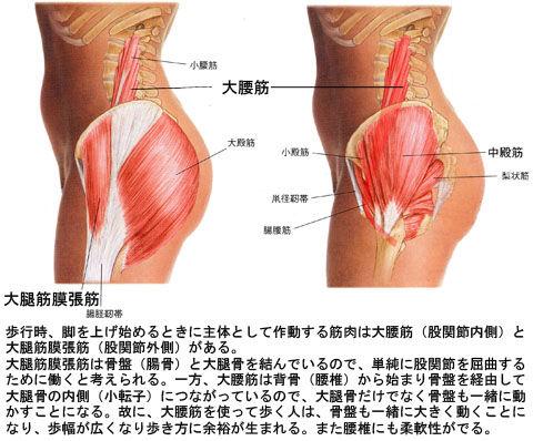大腰筋と大腿筋膜張筋