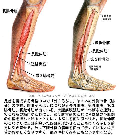 外果の位置と筋肉