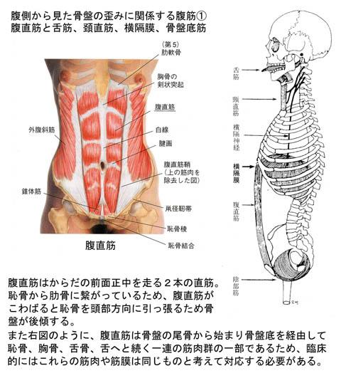 腹側から見た骨盤の歪み_1