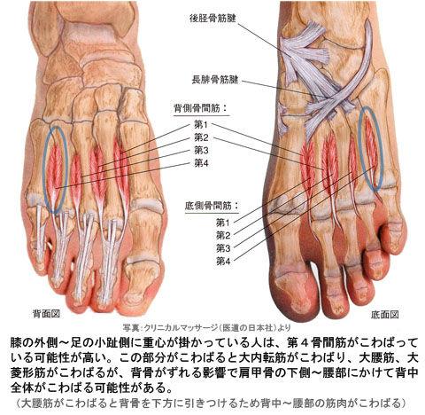 足の第4骨間筋と大内転筋