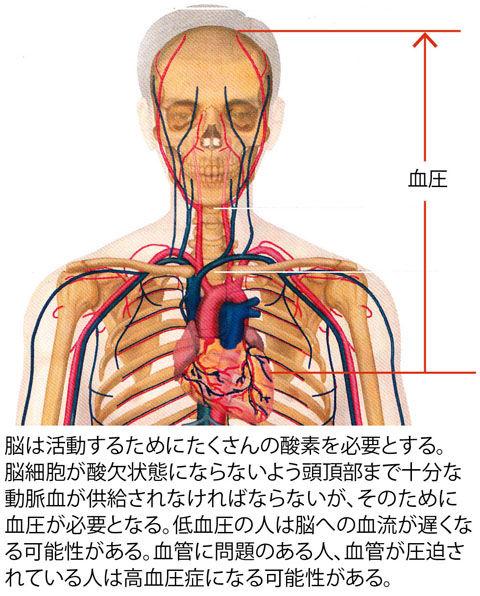 心臓から頭部の血管