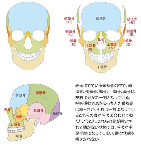 呼吸運動と頭蓋骨の動き