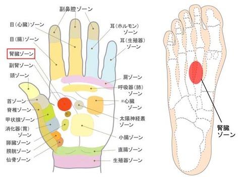 腎臓反射区