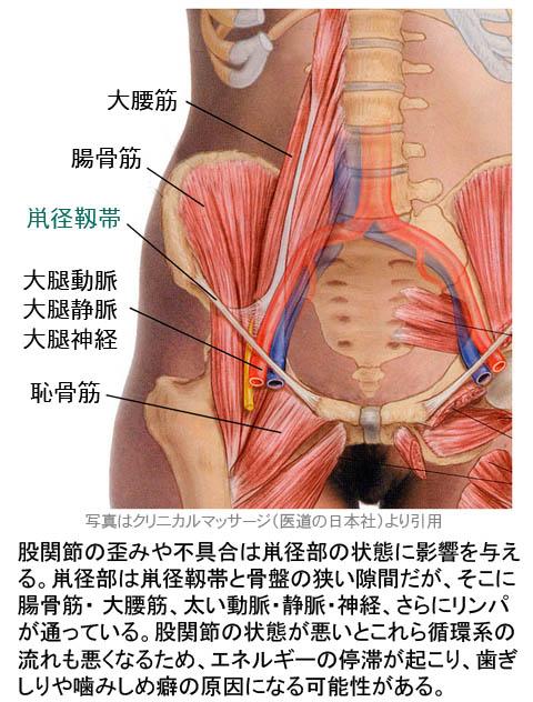 股関節の歪みと噛みしめの関係