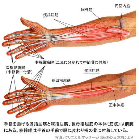 手指屈筋の腱
