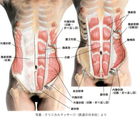 骨盤前面からの腹筋