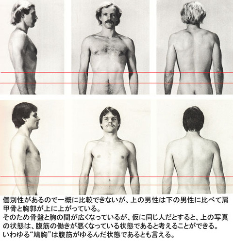 胸と骨盤の間隔比較
