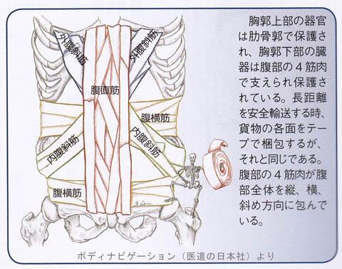 腹部の4つの筋