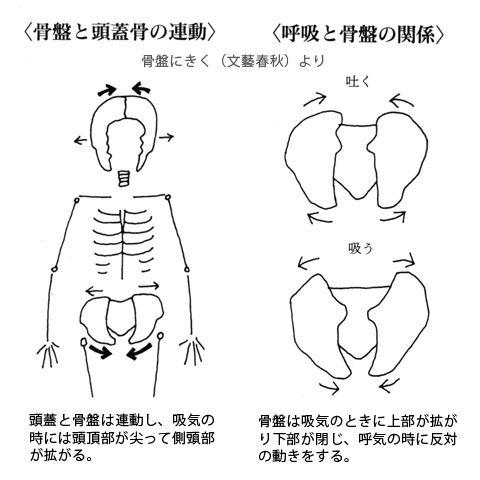呼吸と頭蓋と骨盤の動き
