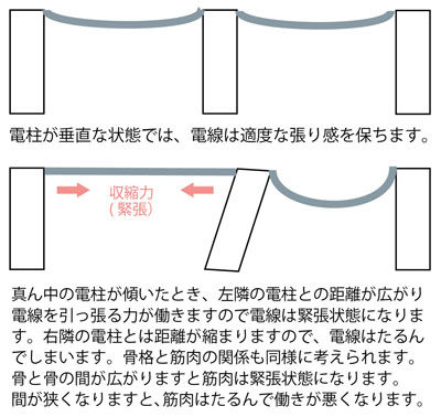 電柱と電線の関係