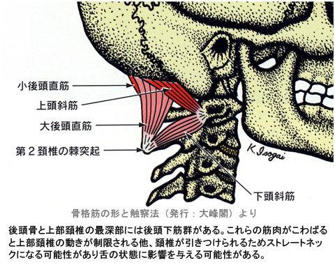 後頭下筋群と上部頚椎