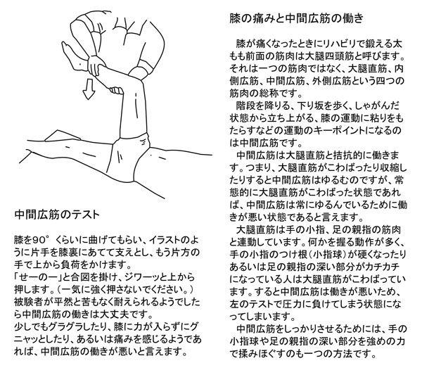 膝の痛みと中間広筋の働き