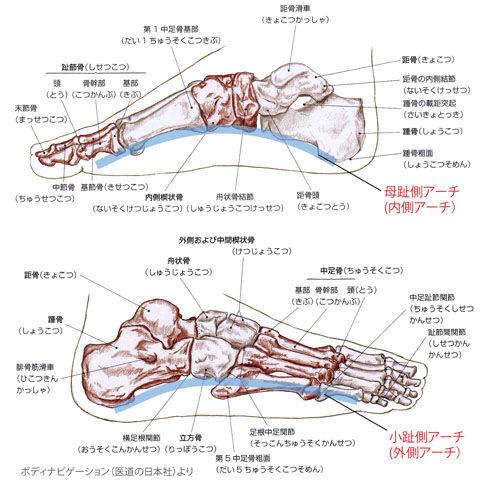 足のアーチ(内側・外側)