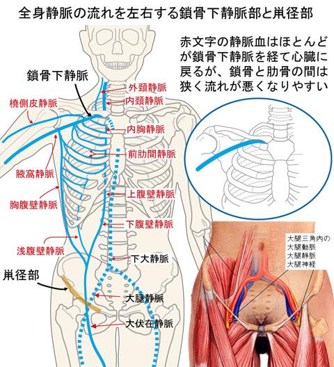 鎖骨下静脈と鼡径部