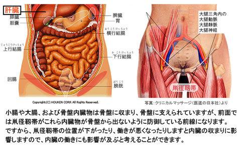 鼡径部と小腸など