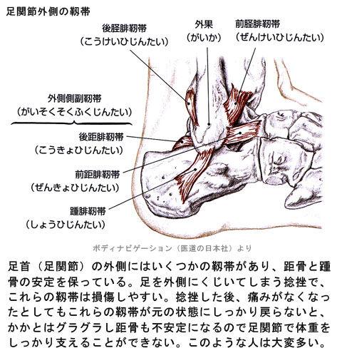 足関節外側の靱帯