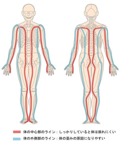 体の中心部ライン・外側部ライン