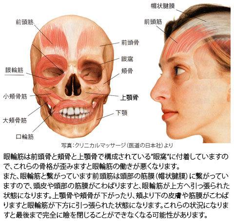 頭蓋の歪みと眼輪筋