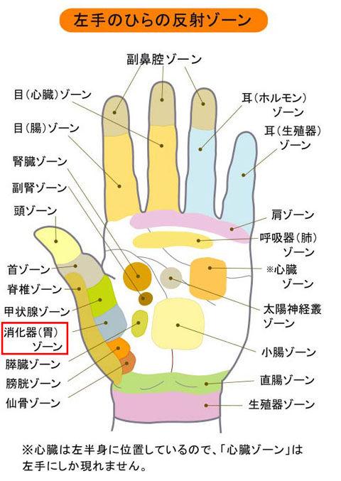 掌_胃の反射区