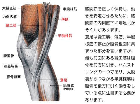 鵞足の働き