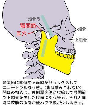 顎関節の動き01