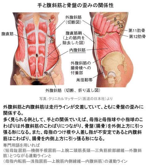 手と腹斜筋と骨盤の歪みの関係性