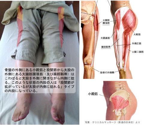 内股_小殿筋と筋膜張筋「こ」