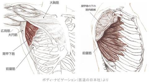 肩甲下筋と前鋸筋